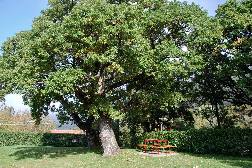 Giardini_Villa_Bonomo_4C