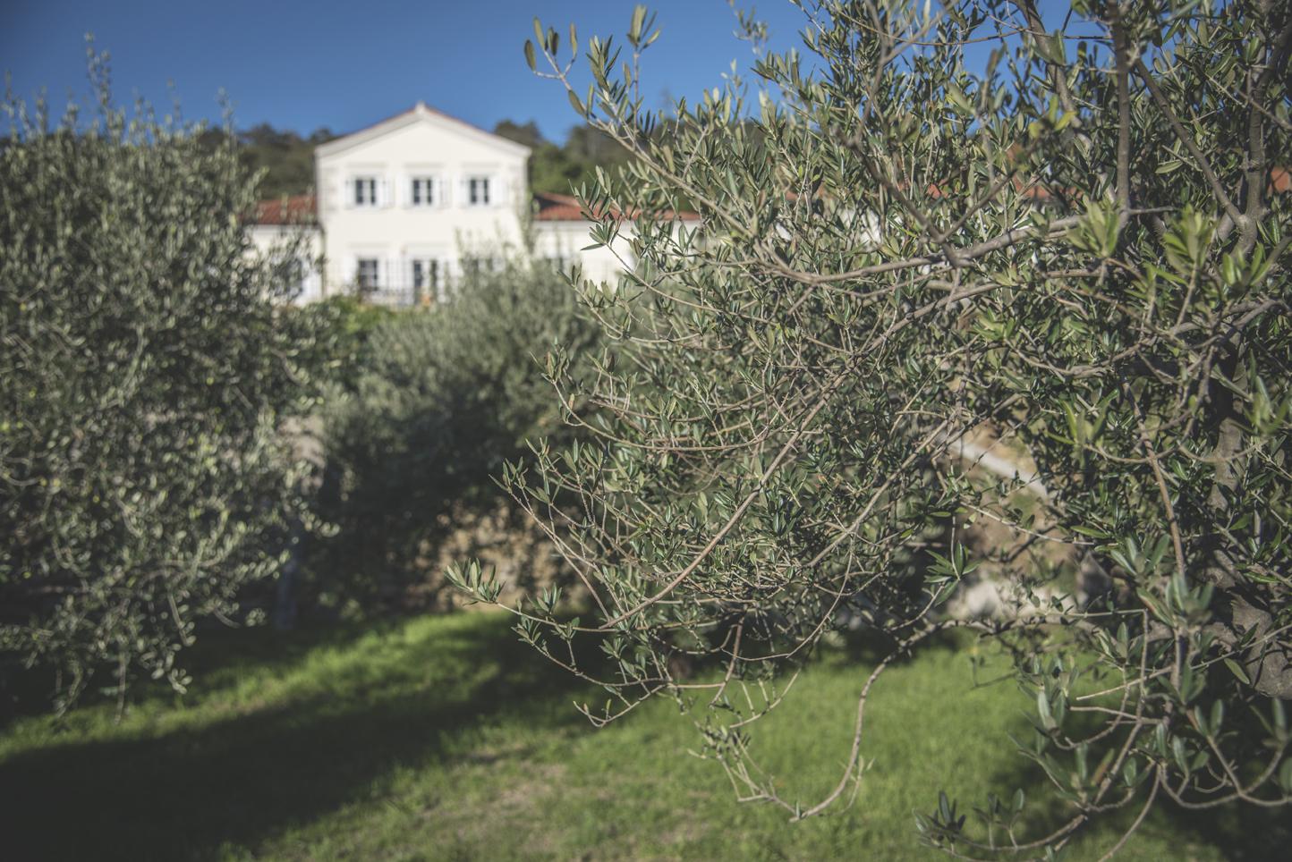 Villa_Bonomo_l'uliveto_3