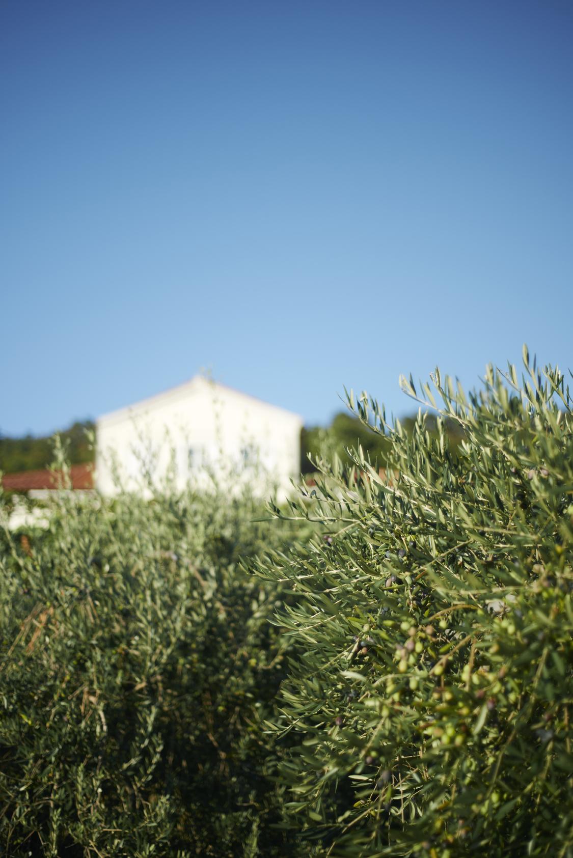 Villa_Bonomo_l'uliveto_4